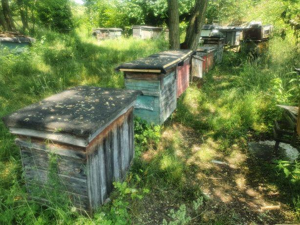 Ule Z Pszczolami Rolnictwo Olx Pl