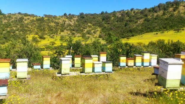 Enxames e núcleos de abelhas 2019