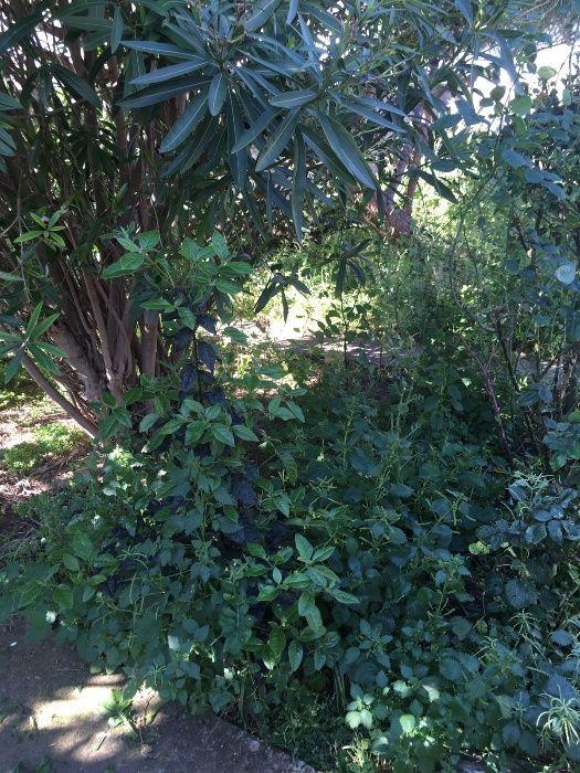 Limpeza de Terrenos e corte de Árvores