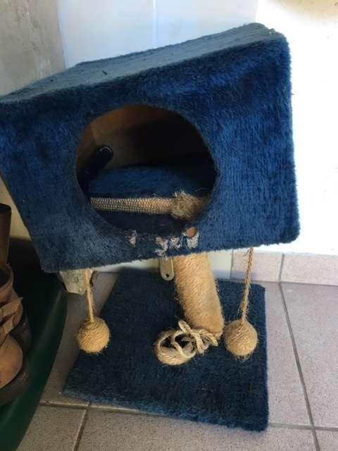Arranhador e cama para gato