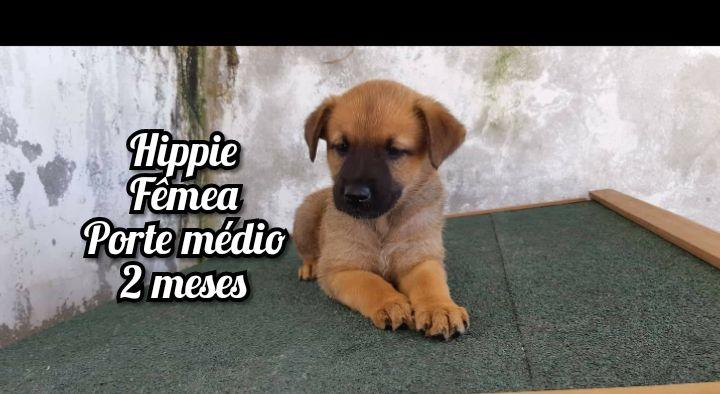 Cães bebés de porte médio para adoção