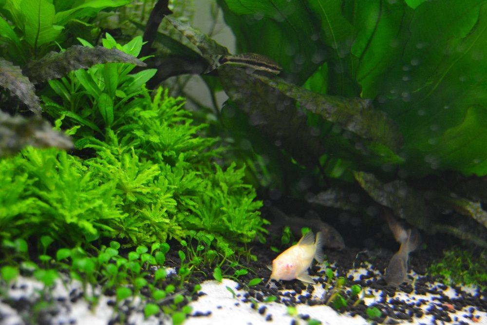 Vendo plantas para aquario