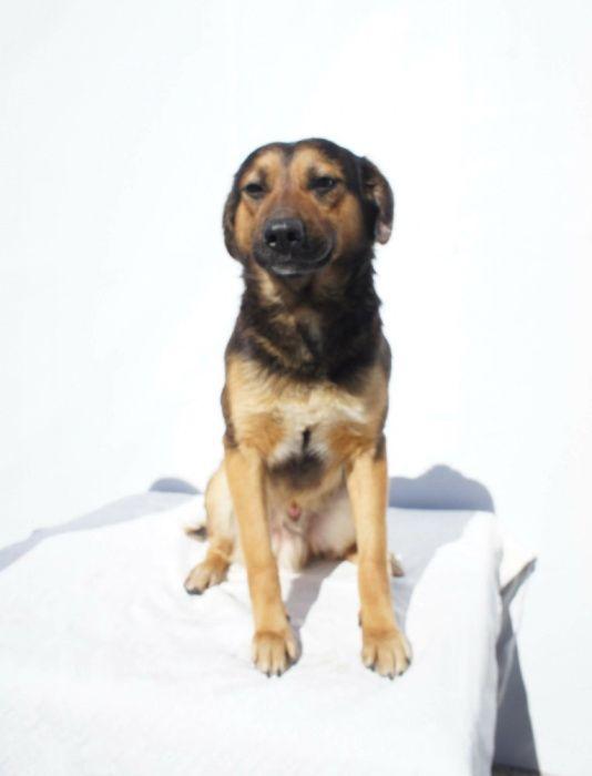 Filó - Cão porte médio