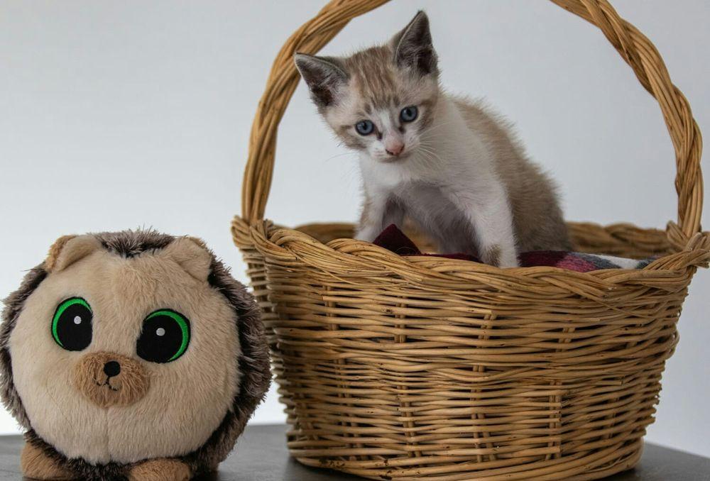 Gatinhos para adoção.