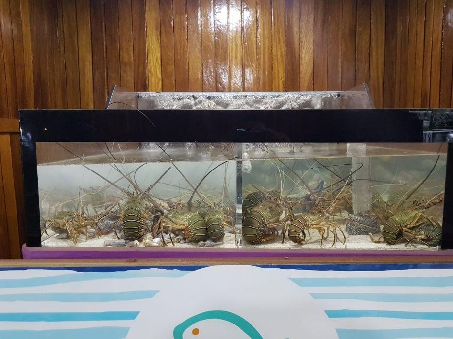 Aquário para lagostins, Sapateiras, lagosta