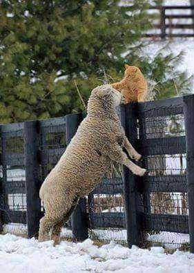 Cuidado a animais domésticos ou de quinta - experiencia comprovada