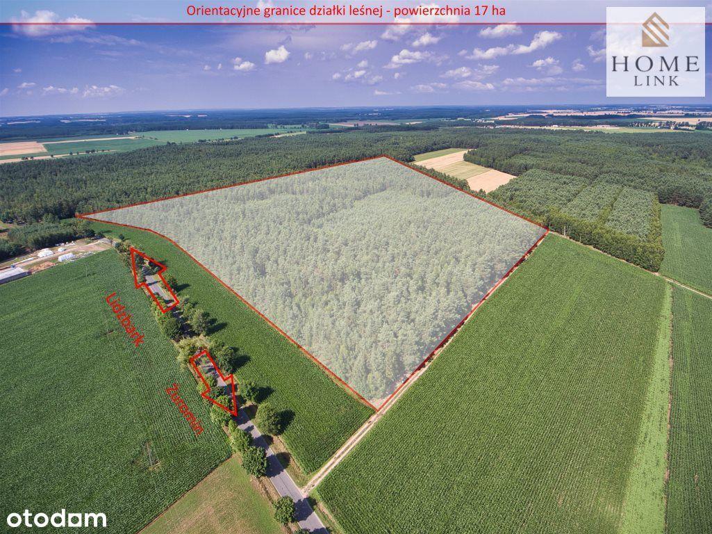 Las iglasto-liściasty 17ha k. Lidzbarka