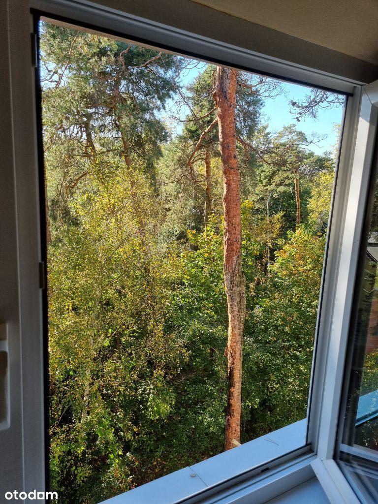 Mieszkanie w koronach drzew - bezpośrednio