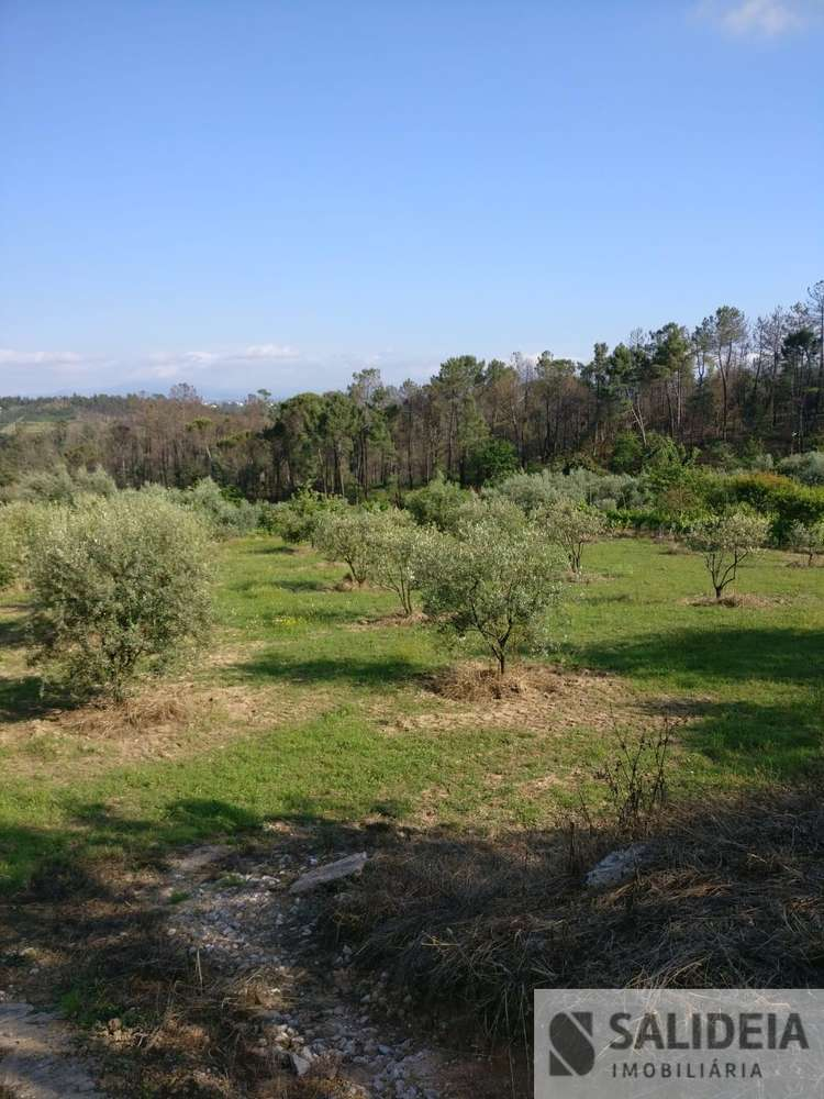 Terreno para comprar, Currelos, Papízios e Sobral, Viseu - Foto 8