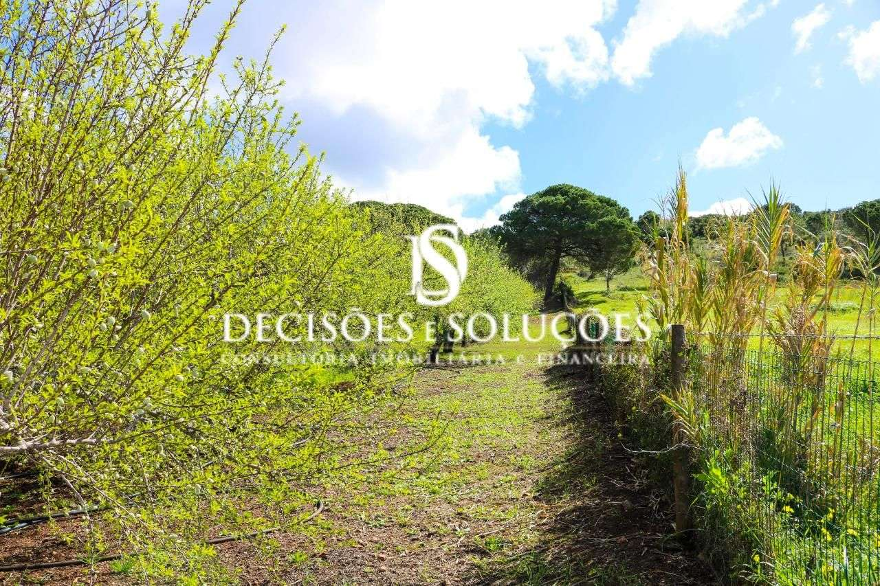 Quintas e herdades para comprar, Santiago do Cacém, Santa Cruz e São Bartolomeu da Serra, Santiago do Cacém, Setúbal - Foto 20