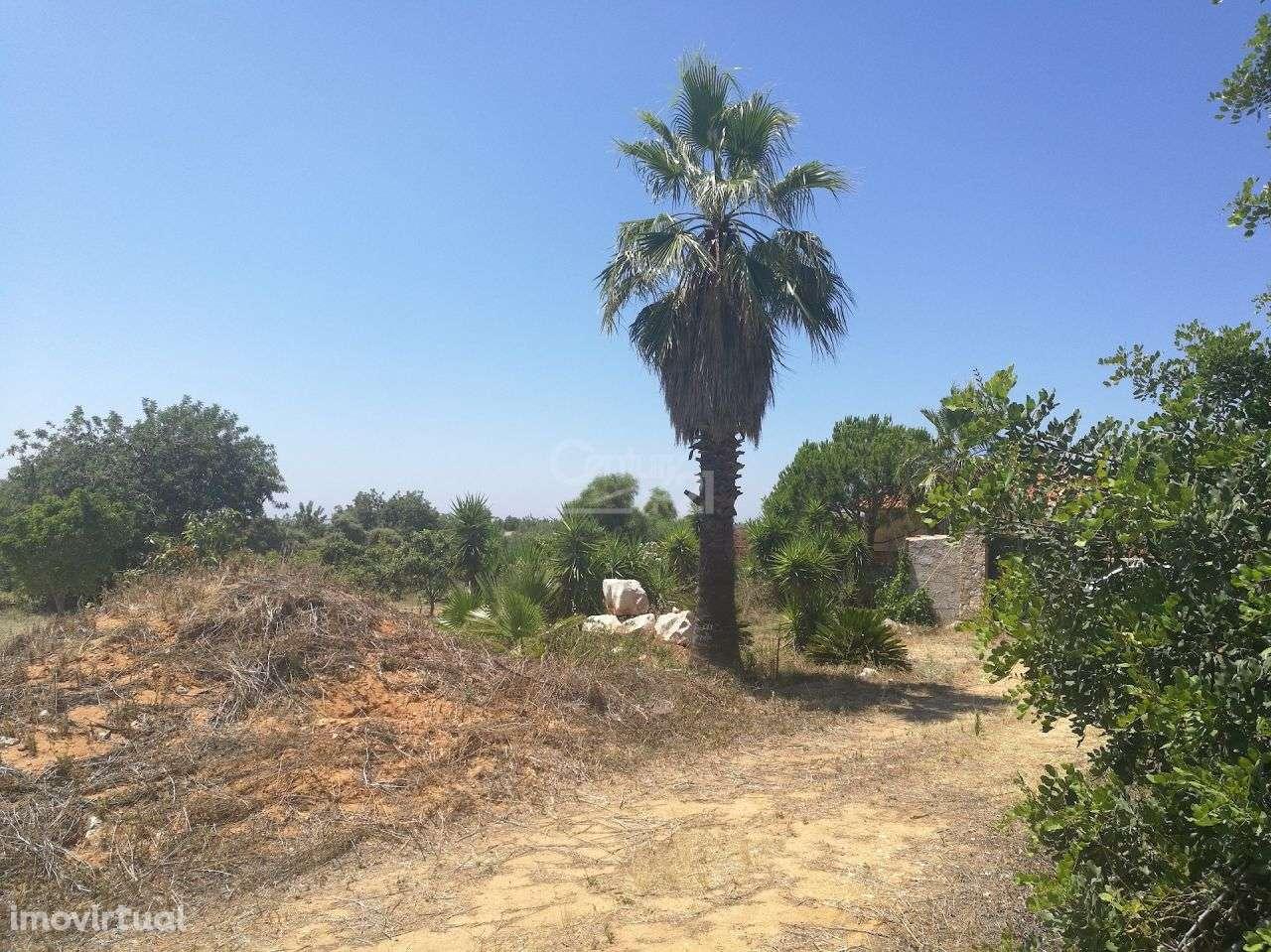 Terreno para comprar, Santa Bárbara de Nexe, Faro - Foto 4