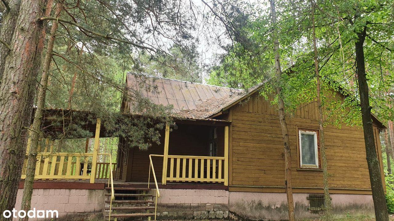 Dom z bala w lesie nad rzeką Narew/Park Narwiański
