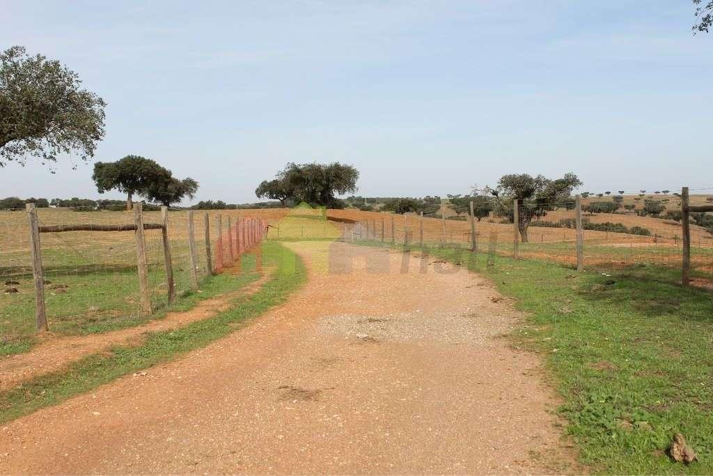 Quintas e herdades para comprar, Albernoa e Trindade, Beja - Foto 6