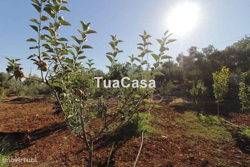Quintas e herdades para comprar, Moncarapacho e Fuseta, Olhão, Faro - Foto 33