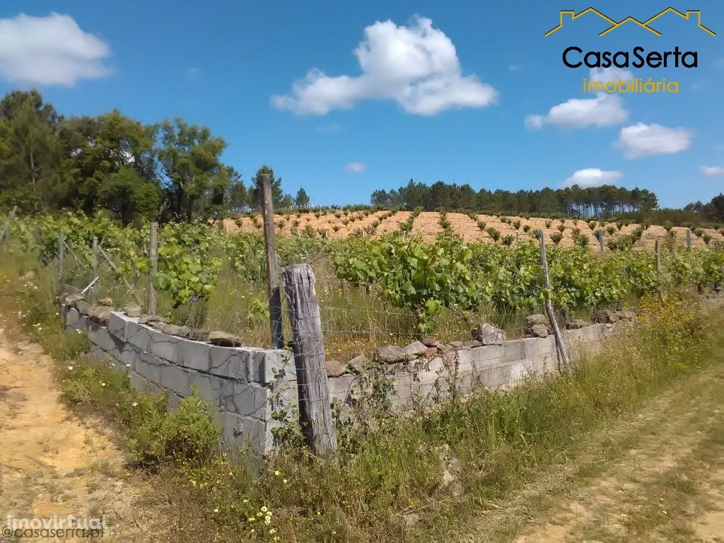 Terreno para comprar, Montes da Senhora, Proença-a-Nova, Castelo Branco - Foto 4