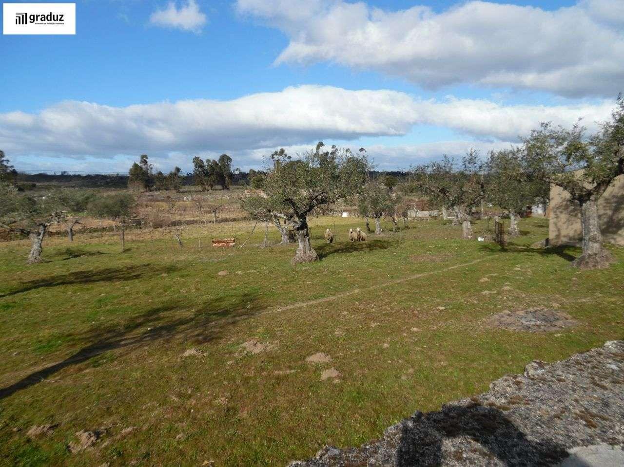 Terreno para comprar, Alcains, Castelo Branco - Foto 4