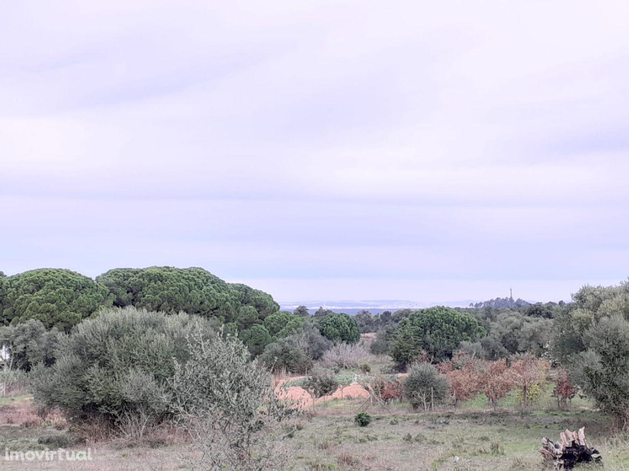 Terreno com 4036m2 na serra da Arrábida