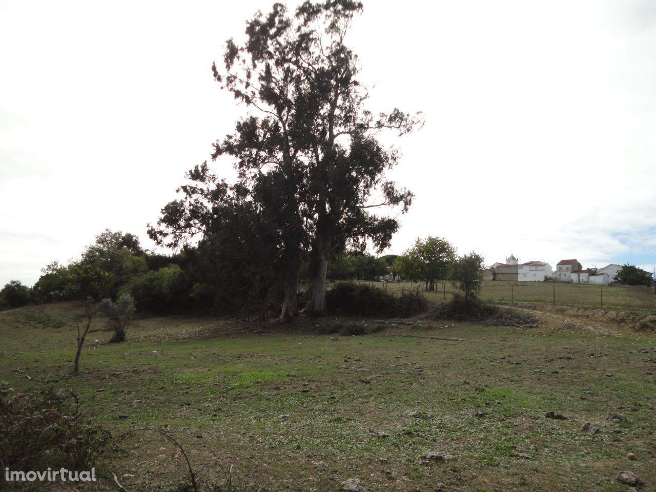 Quintas e herdades para comprar, Alfarelos, Soure, Coimbra - Foto 4