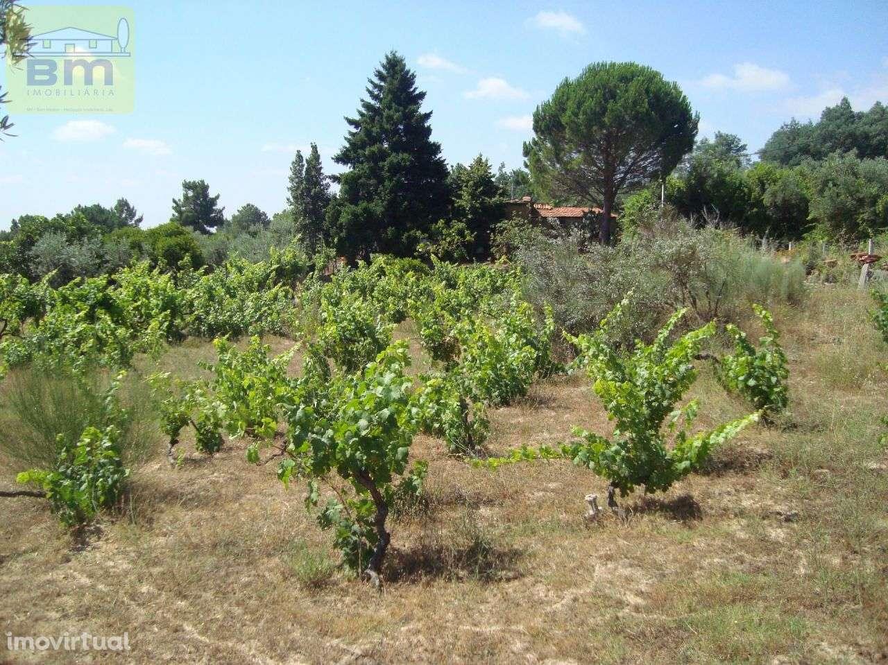 Quintas e herdades para comprar, Almaceda, Castelo Branco - Foto 46