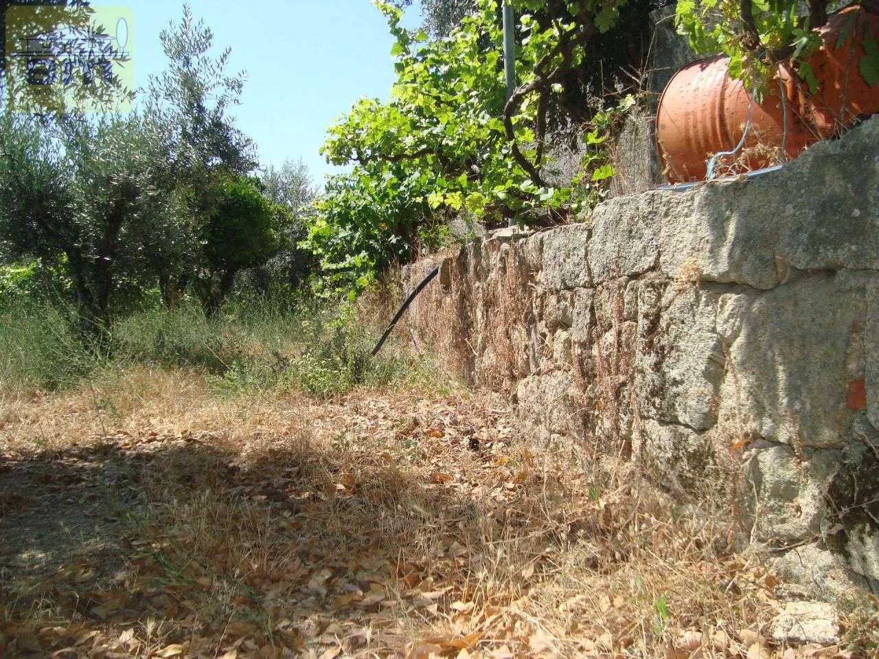 Quintas e herdades para comprar, Almaceda, Castelo Branco - Foto 25