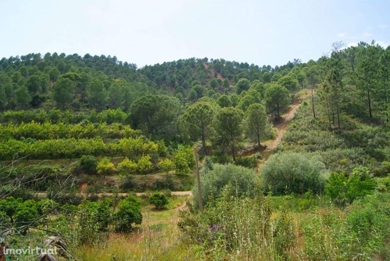 Terreno para comprar, Alferce, Monchique, Faro - Foto 23