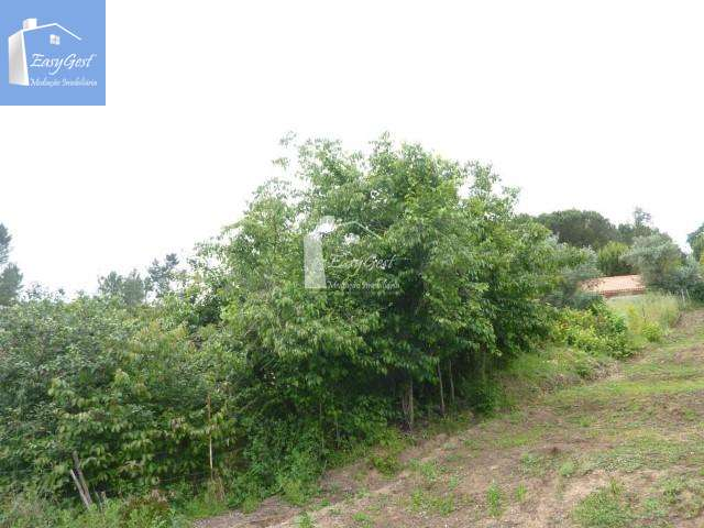 Quintas e herdades para comprar, Martinchel, Abrantes, Santarém - Foto 32