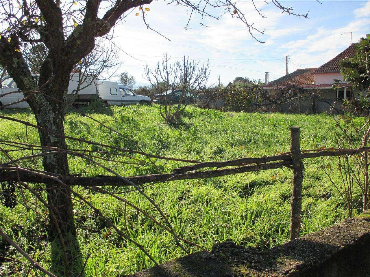 Terreno para comprar, Dominguizo, Castelo Branco - Foto 3