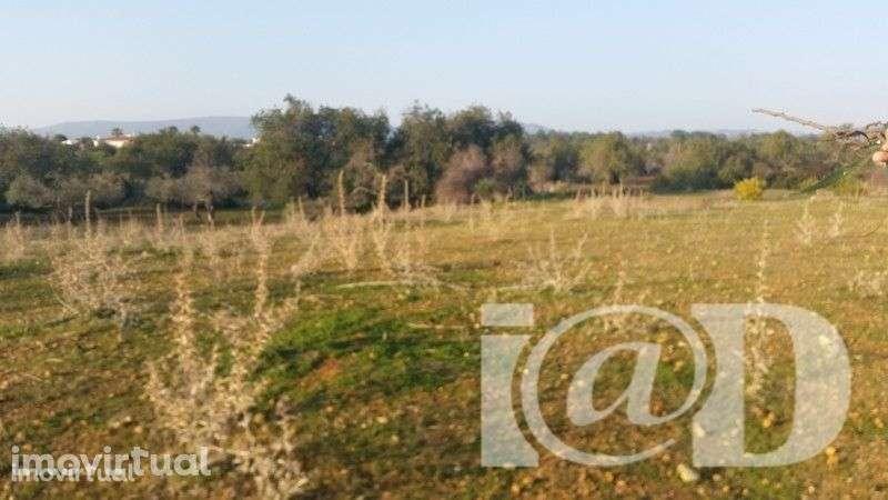 Quintas e herdades para comprar, Santa Bárbara de Nexe, Faro - Foto 5