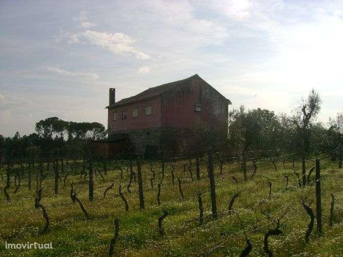 Quintas e herdades para comprar, Santar e Moreira, Nelas, Viseu - Foto 1