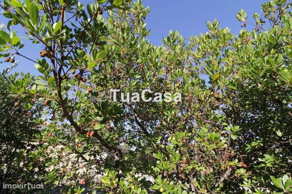 Quintas e herdades para comprar, Moncarapacho e Fuseta, Olhão, Faro - Foto 37