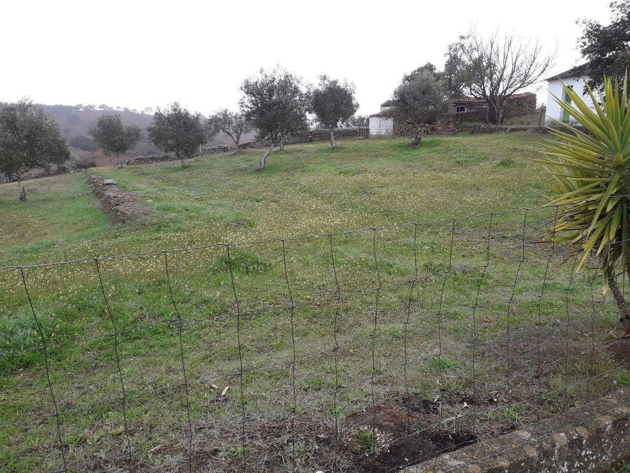 Quintas e herdades para comprar, Almodôvar e Graça dos Padrões, Beja - Foto 15