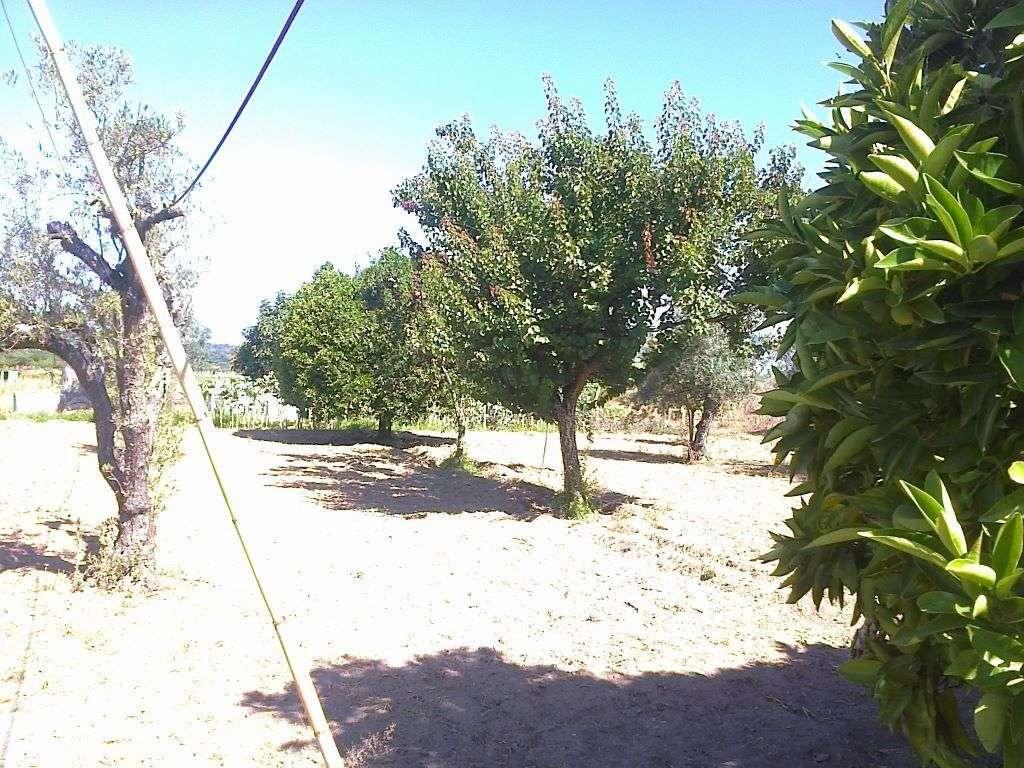 Quintas e herdades para comprar, Ponte de Sor, Tramaga e Vale de Açor, Portalegre - Foto 14