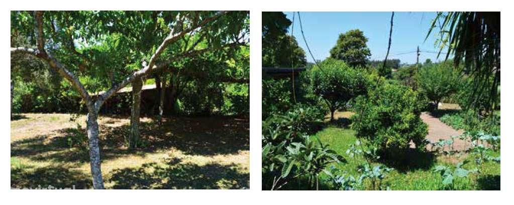 Quintas e herdades para comprar, Lemenhe, Mouquim e Jesufrei, Braga - Foto 22