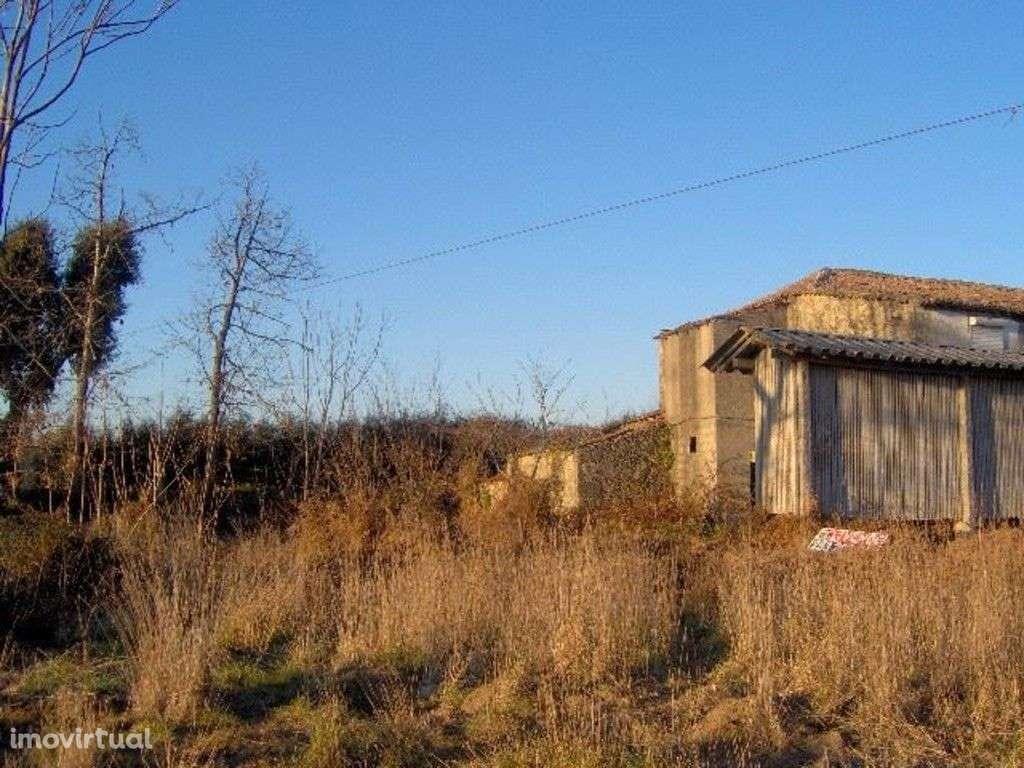 Quintas e herdades para comprar, Palmeira, Braga - Foto 6