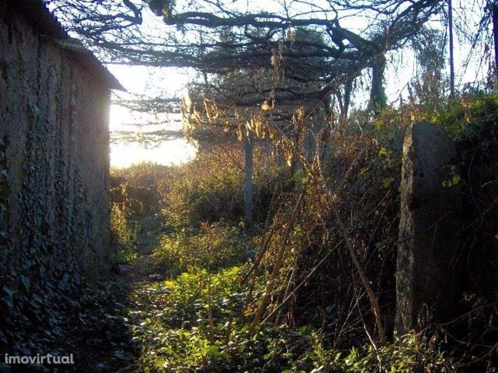 Quintas e herdades para comprar, Palmeira, Braga - Foto 11