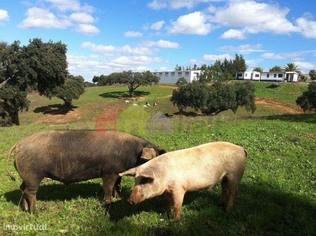 Quintas e herdades para comprar, Aljustrel e Rio de Moinhos, Aljustrel, Beja - Foto 22