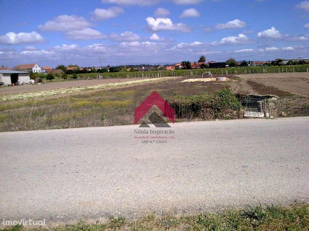 Terreno para comprar, Sepins e Bolho, Cantanhede, Coimbra - Foto 2