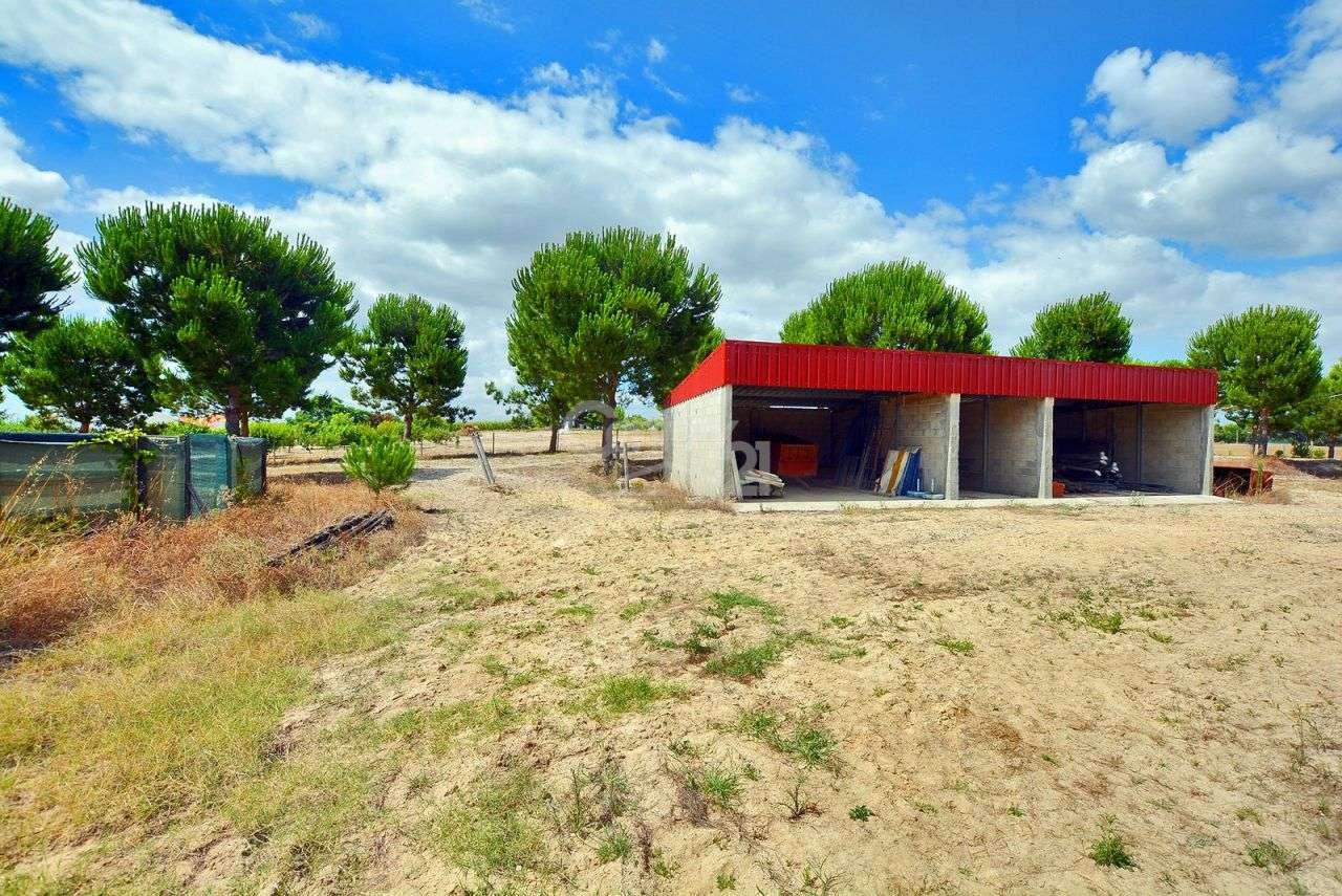 Quintas e herdades para comprar, Branca, Coruche, Santarém - Foto 47