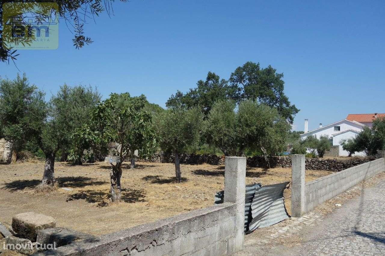 Quintas e herdades para comprar, Escalos de Cima e Lousa, Castelo Branco - Foto 22