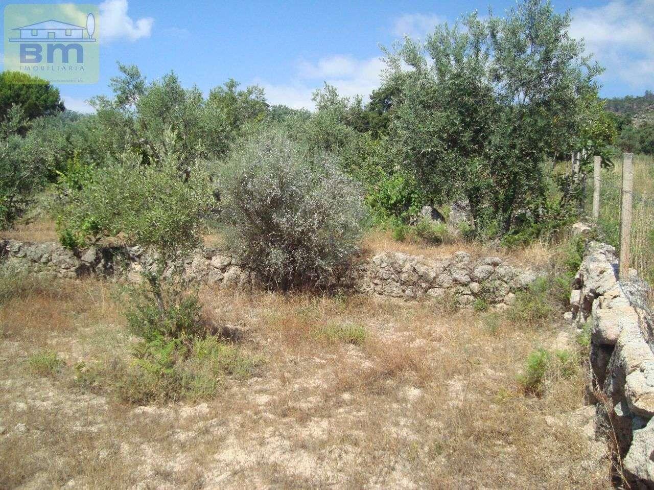 Quintas e herdades para comprar, Almaceda, Castelo Branco - Foto 36