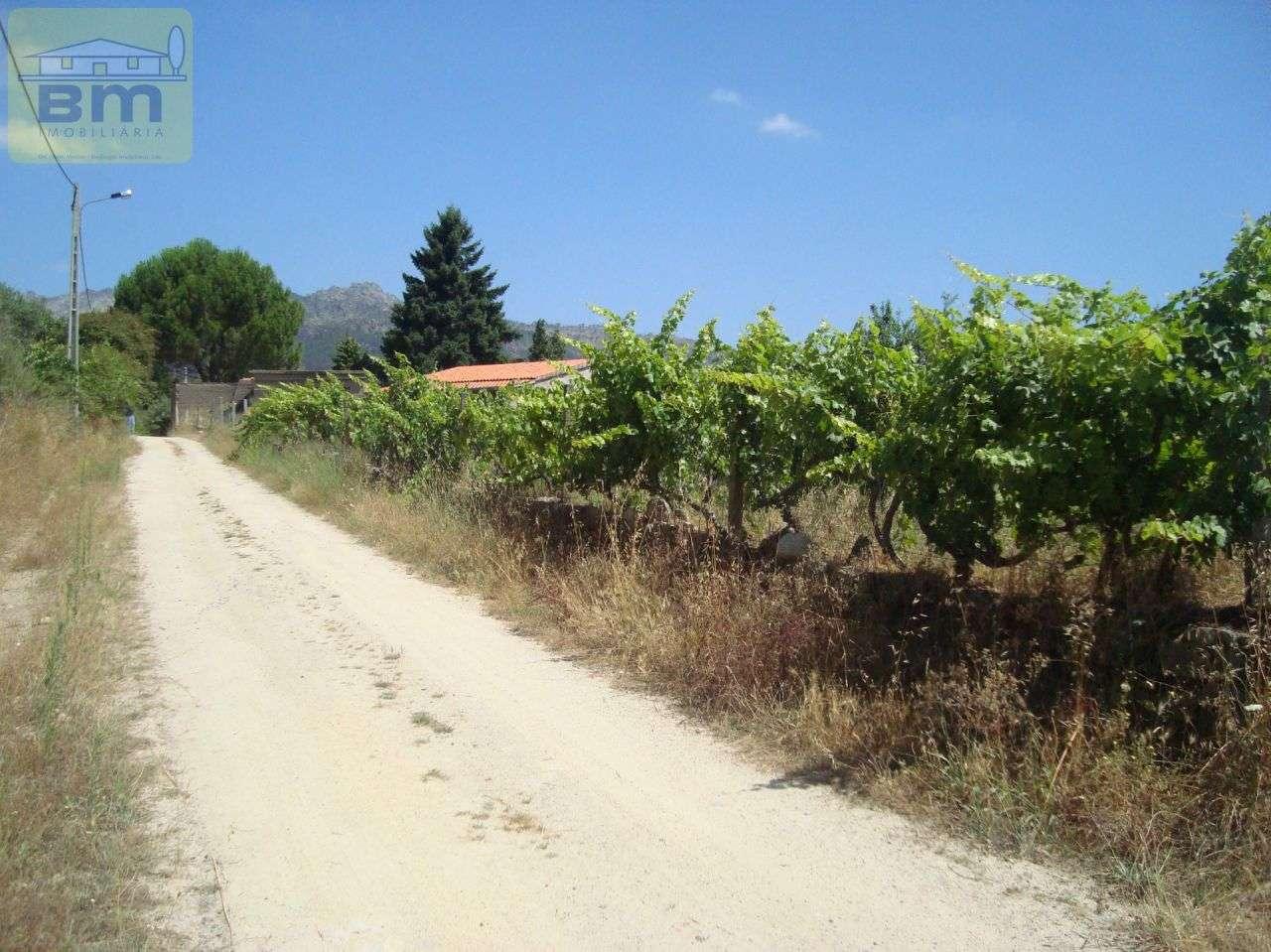Quintas e herdades para comprar, Almaceda, Castelo Branco - Foto 49