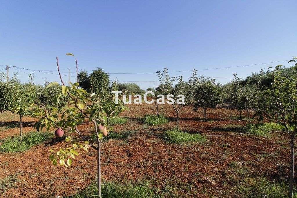 Quintas e herdades para comprar, Moncarapacho e Fuseta, Olhão, Faro - Foto 31