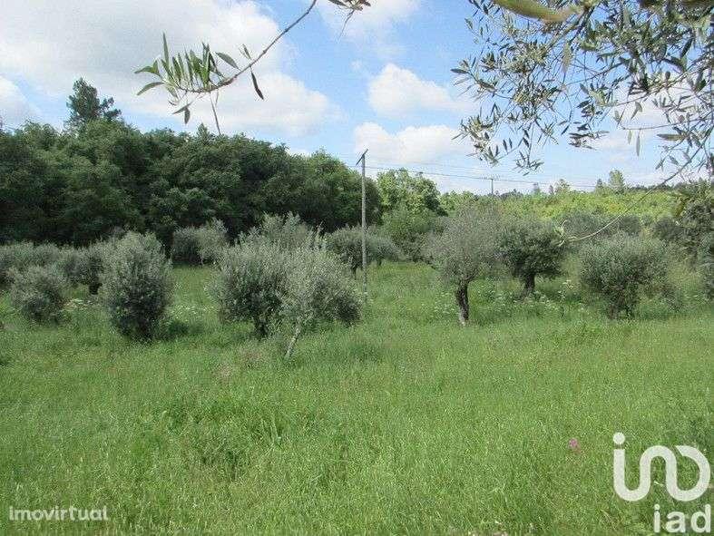 Terreno para comprar, Areias e Pias, Santarém - Foto 2