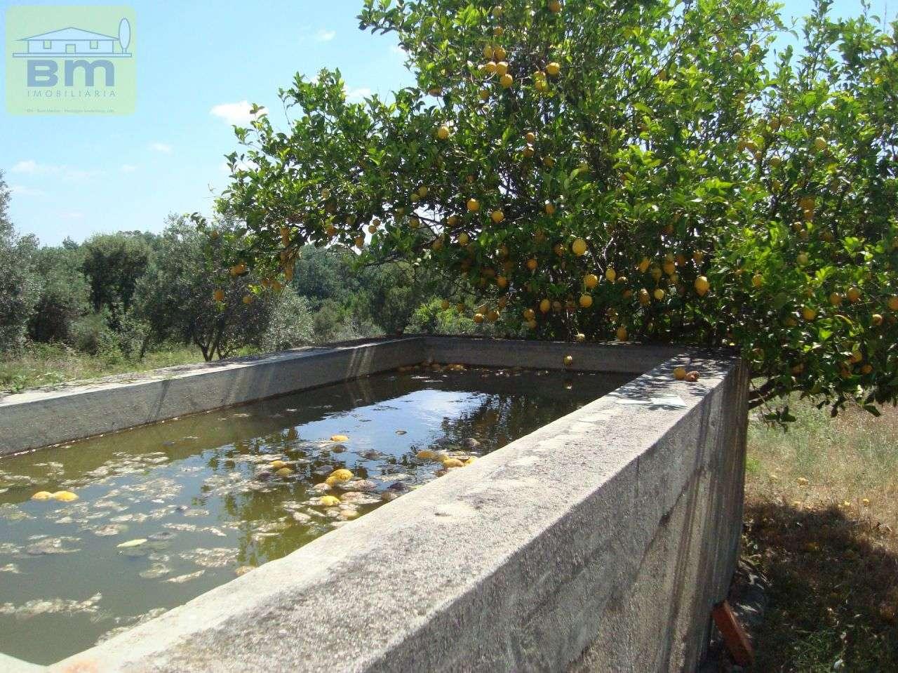 Quintas e herdades para comprar, Almaceda, Castelo Branco - Foto 43