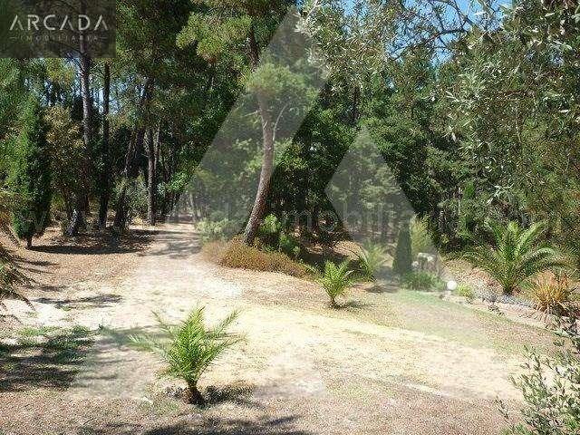 Quintas e herdades para comprar, Sangalhos, Anadia, Aveiro - Foto 16