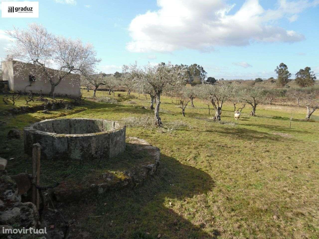 Terreno para comprar, Alcains, Castelo Branco - Foto 1