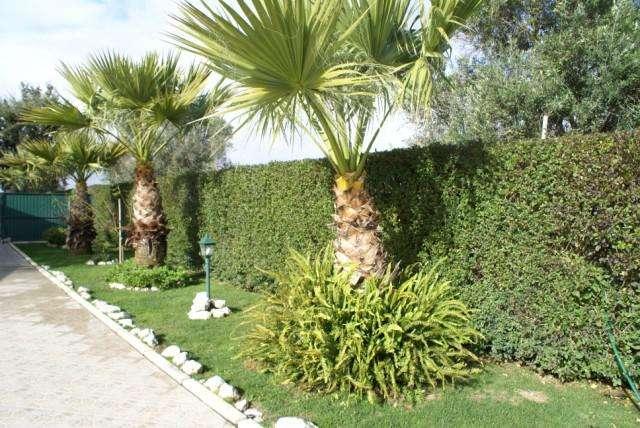 Quintas e herdades para comprar, Atalaia e Alto Estanqueiro-Jardia, Setúbal - Foto 9
