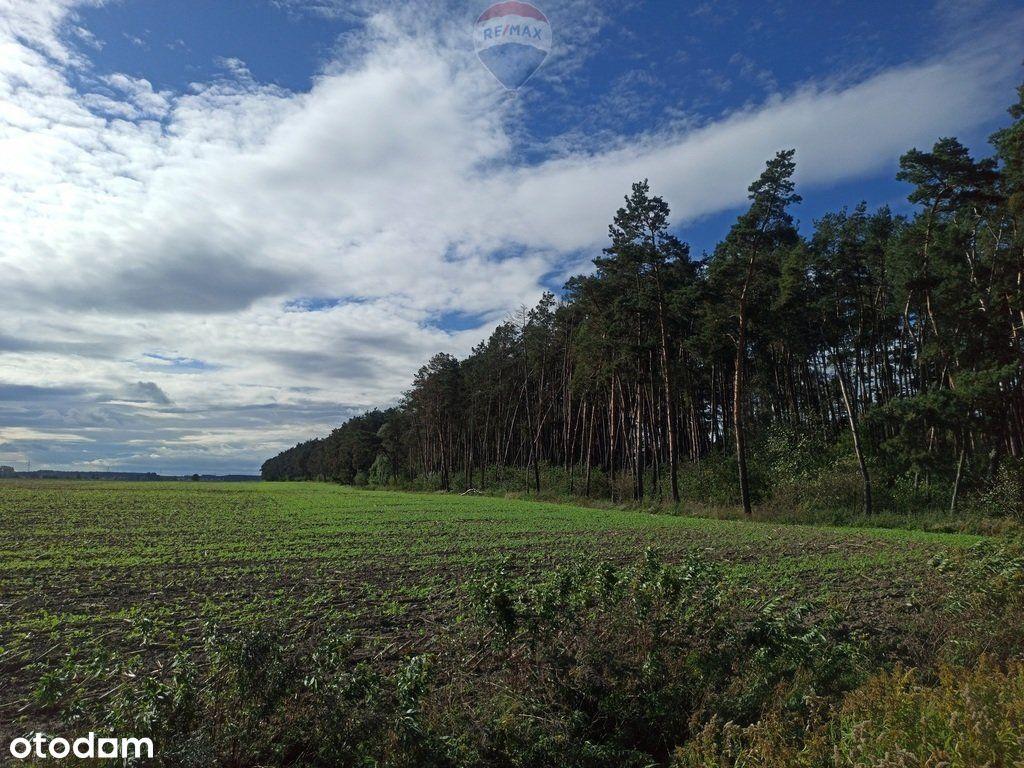 Las mieszany 3,8320 ha Zduny (7 km od Krotoszyna)