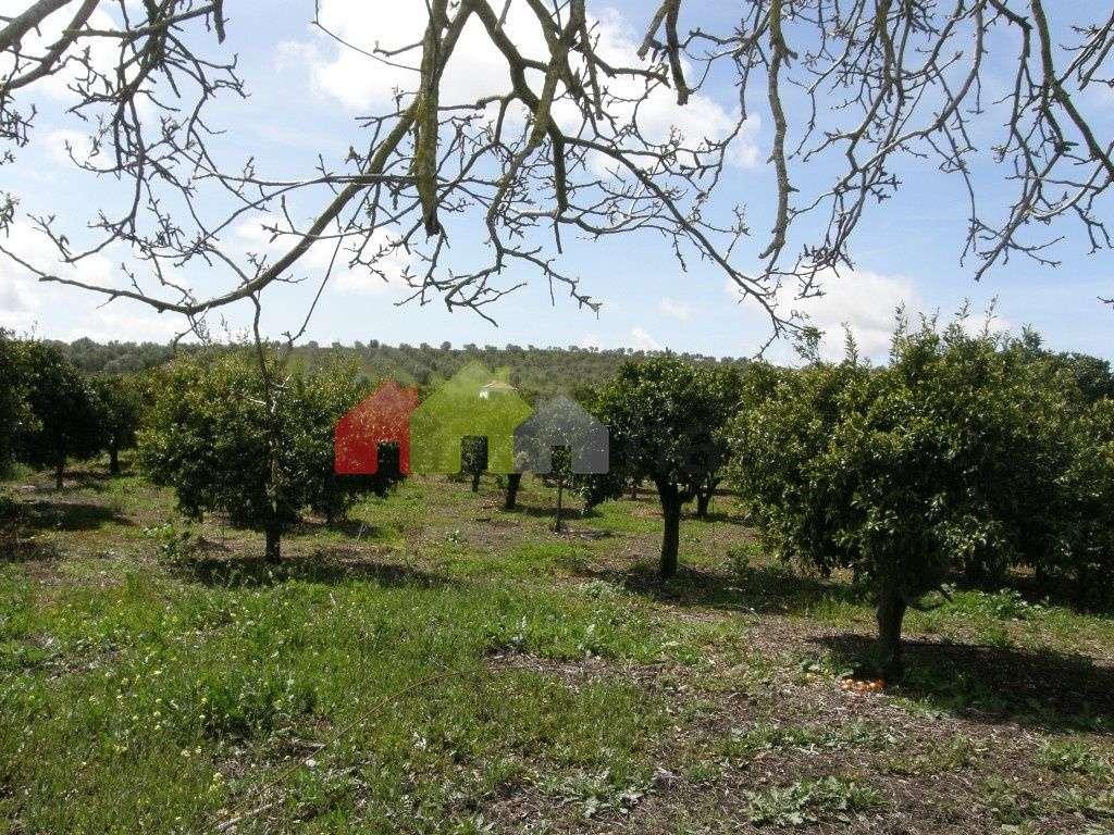 Terreno para comprar, Santa Vitória e Mombeja, Beja - Foto 11