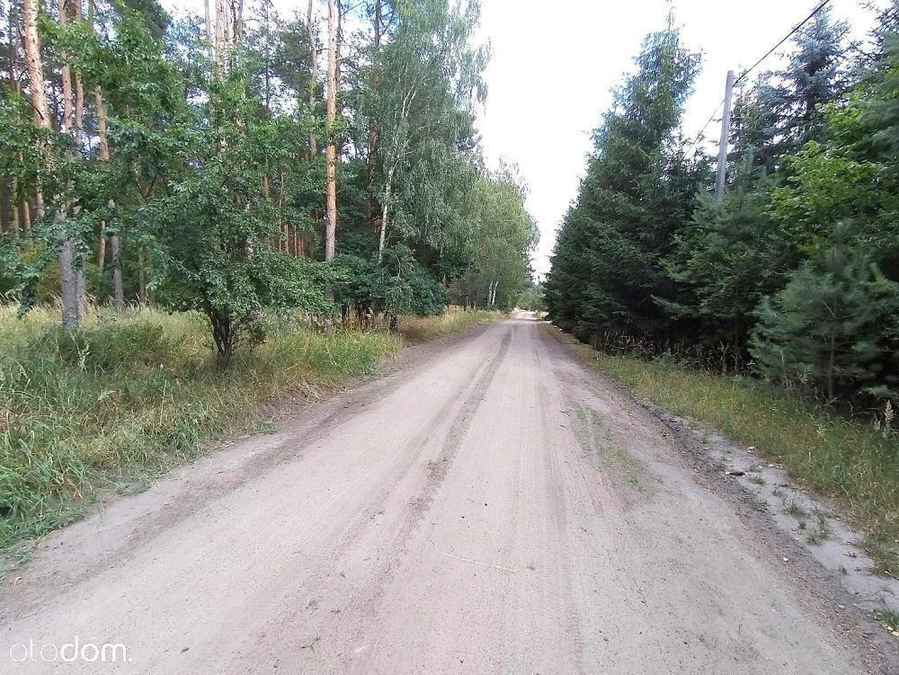 Dąbrówka Kościelna - Puszcza Zielonka
